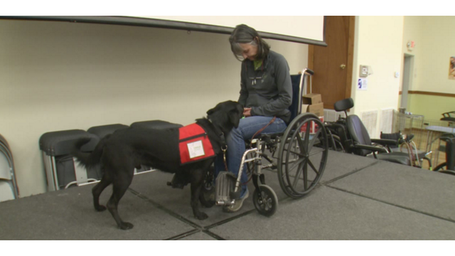 Fake service dogs: The harm caused by pet owners who break the rules