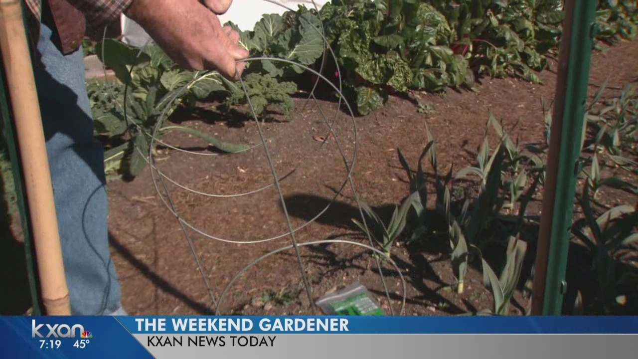 Weekend Gardener: Ditch those flimsy tomato cages!