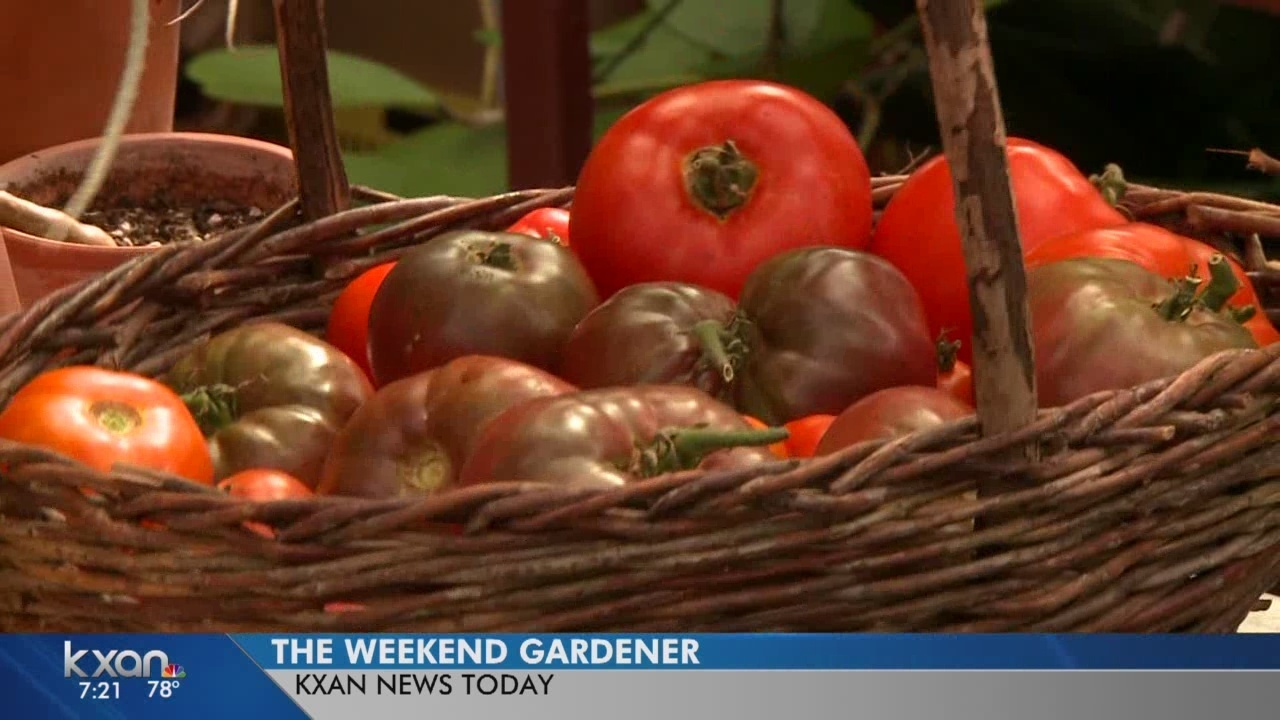 Weekend Gardener: 5th Annual Tomato Round-Up