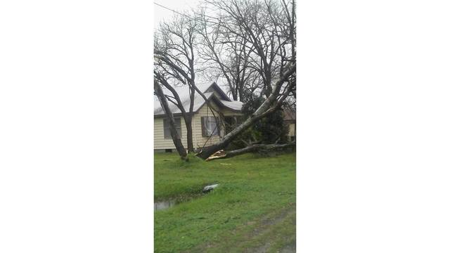 Trees uprooted during severe weather in Thrall, Texas_422585
