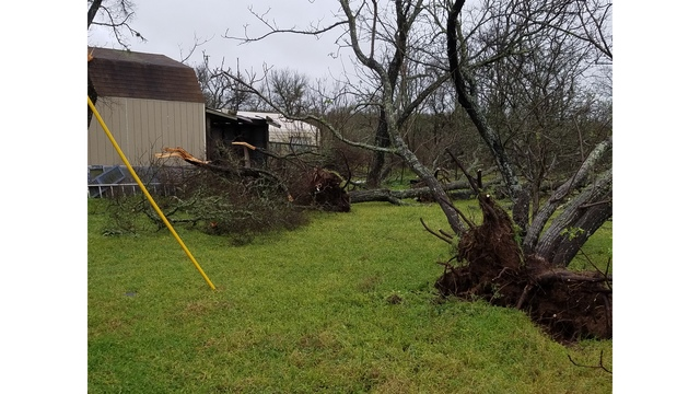 Visible damage to trees 5 miles south of Manor, Texas_422458