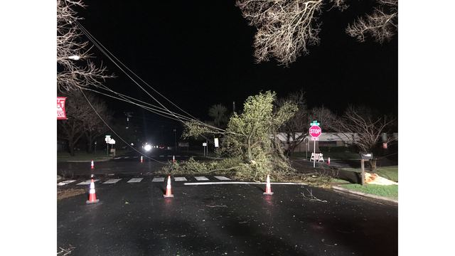 Heavy winds knocking over trees in Elgin_422328