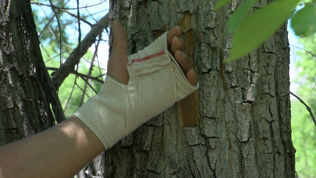 Man taken at gunpoint, nailed to tree says he's not a criminal