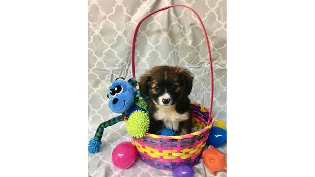 Puppies at the Bastrop County Animal Shelter (Courtesy_Wendy Ballard)_647539
