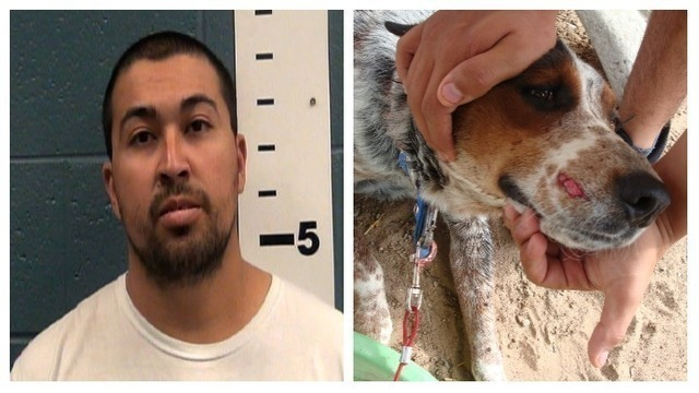 New Mexico man pleads guilty to shooting neighbor's dog