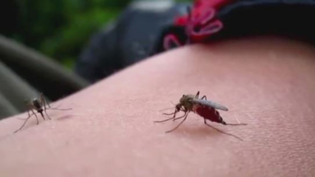Mosquito samples in Georgetown, Cedar Park positive for West Nile