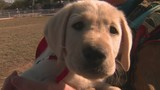Students meet puppies they'll train to be service dog superheroes