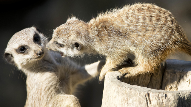 Texas zoo gives jilted lovers best way to get back at exes on V-Day