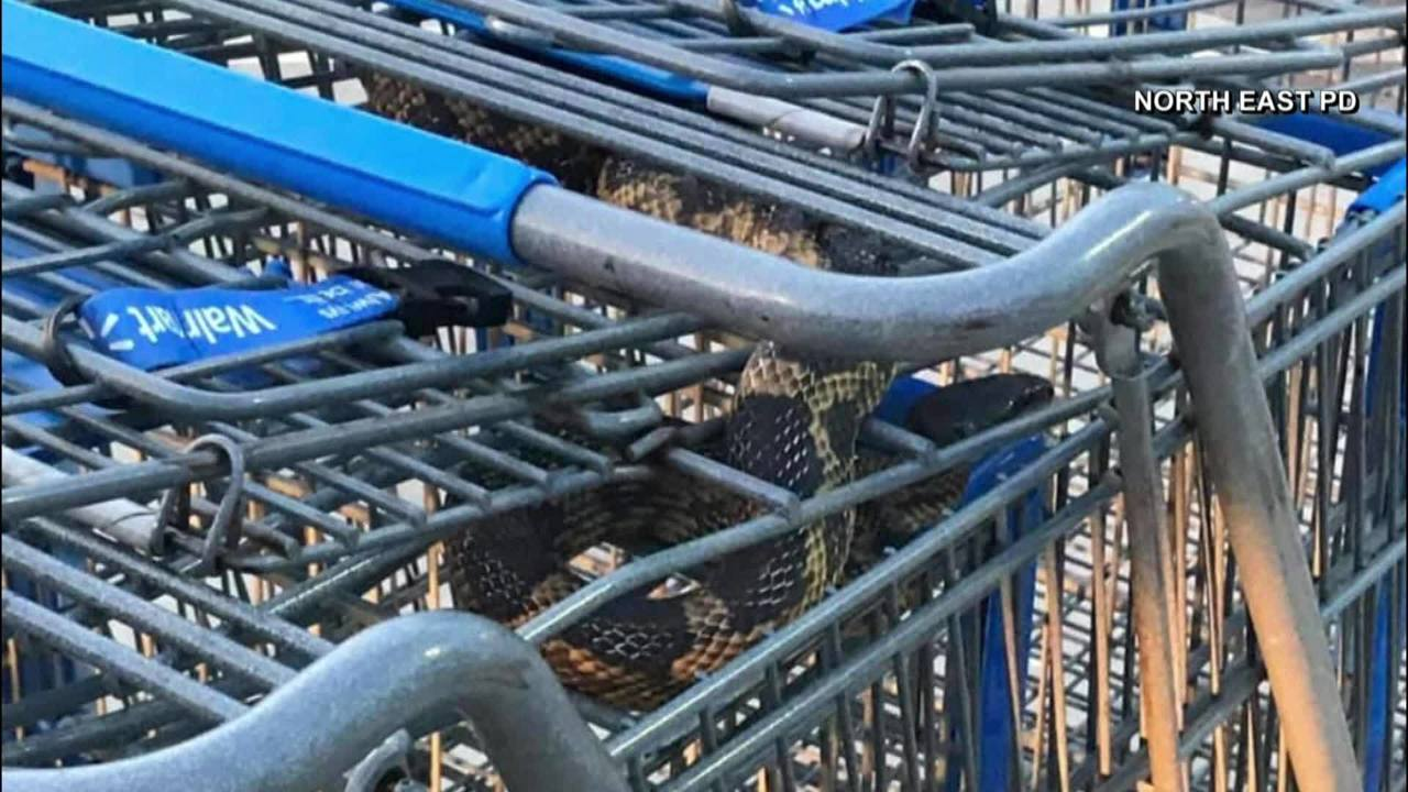 Snake Discovered In North Texas Walmart Grocery Cart